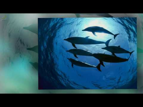 Dolphin Dreamtime - Descending [HQ] (видео)
