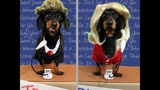 Nonton Wiener Dog Debate: 3rd Presidential Debate Trump vs Clinton 2016 Film Subtitle Indonesia Streaming Movie Download
