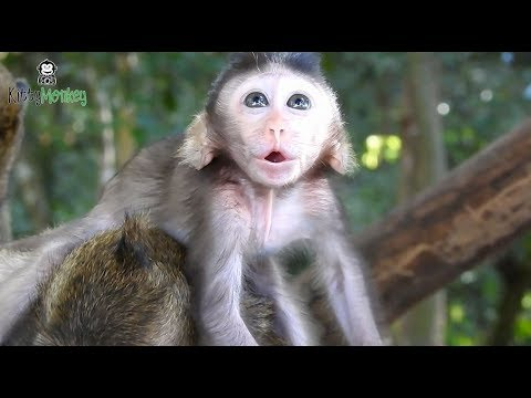 Pity baby monkey cry call mother help, poor baby monkey full of tear