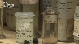 Pickle jars and precious specimens