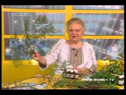 Наталія Земна - про цілющі властивості верби, бузку, кульбаби [ЗАПИС ЕФІРУ]