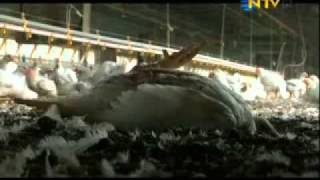 Nonton Food  Inc  2008  Film Subtitle Indonesia Streaming Movie Download