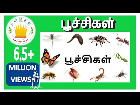 Learn Tamil Videos Bugs and Insects Tamil Name