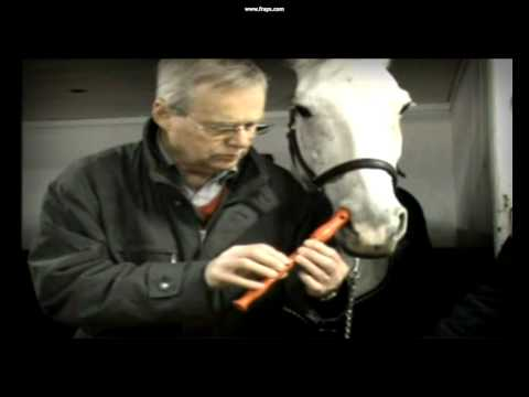 Horse plays flute