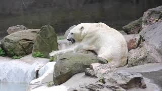 Tundra deserves better.