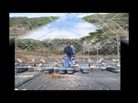 Intensive shrimp farming