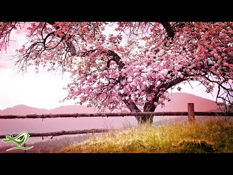 Relaxing Piano Music: Romantic Music, Beautiful Relaxing Music, Sleep Music, Stress Relief ★122