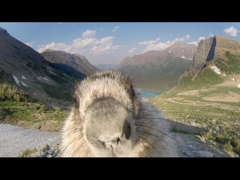 Marmot Adorably Ruins Time Lapse of Glacier National Park