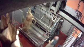 Franske slagterier skal videoovervåges efter flere skandaler