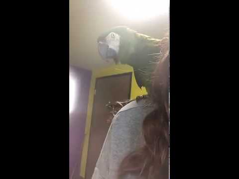 Cookie the Severe Macaw