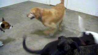 Doggie Laser Tag
