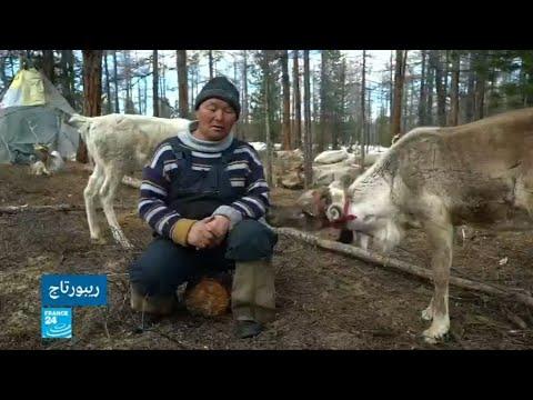 العرب اليوم - شاهد: رعاة الرنة على الحدود الروسية المنغولية ينفصلون عن الحداثة