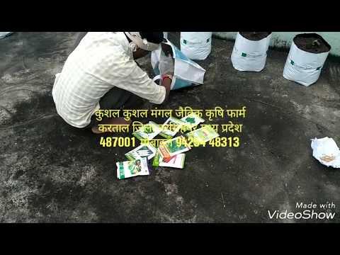 Video किचन गार्डन छत पर  कैसे बनाये  कुशल मंगल जैविक कृषि फार्म करताज नर download in MP3, 3GP, MP4, WEBM, AVI, FLV January 2017