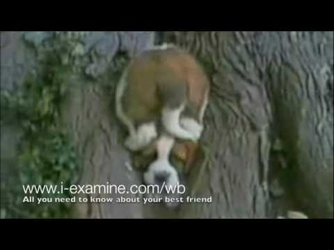 Great Dog Bloopers