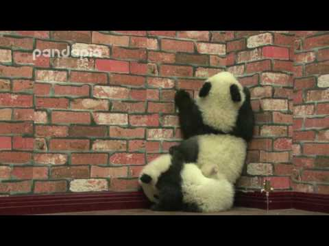 how to be a panda helper