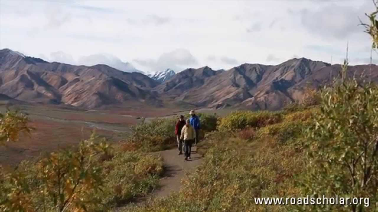 Hike Denali National Park: Taiga to Tundra