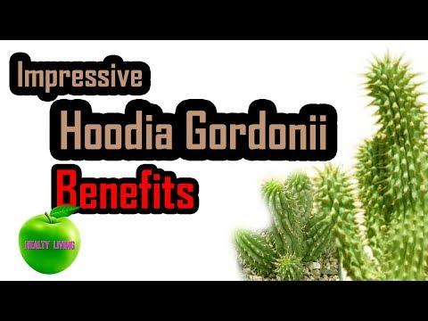 Impressive  Hoodia  Gordonii Benefits 🍏