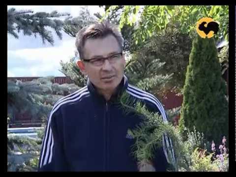 700design ru готовые ландшафтные решения