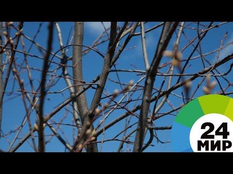 Весна уже близко: синоптики рассказали, когда ждать долгожданное тепло - МИР 24