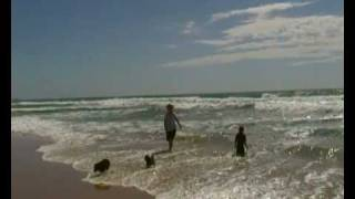 Urunga Australia  city photo : Beach Urunga NSW Australia Schipperkes