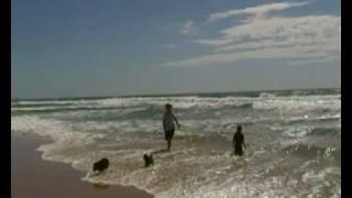 Urunga Australia  City pictures : Beach Urunga NSW Australia Schipperkes
