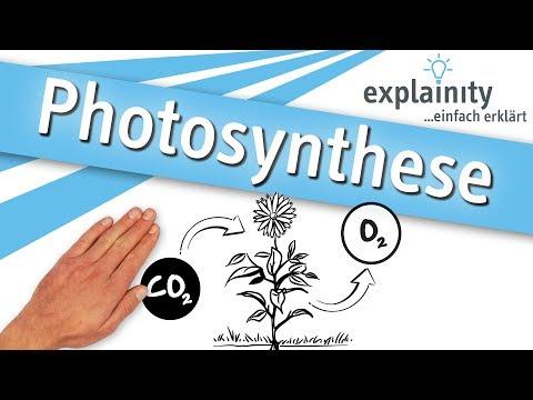 Photosynthese einfach erklärt