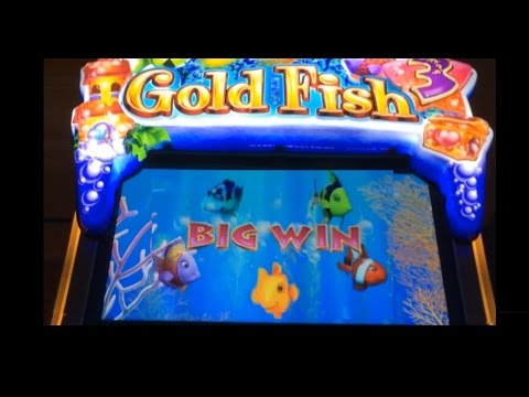 ☆ BACK TO BACK TO BACK SLOT BONUSES!! Gold Fish 3 Slot Machine Wins and LIVE PLAY! ~WMS (DProxima)