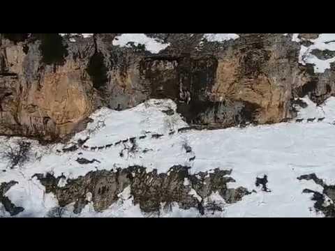 Preview video Branco di cervi in cerca di sole