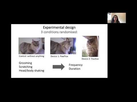 Understanding the interaction between animals and wearables: the wearer experience of cats
