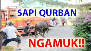 Video Cow Sacrifice Raged!! Angry!! Stress !! Fear the Motor. during the Eid al-Adha prayer offering 2019 MP3, 3GP, MP4, WEBM, AVI, FLV Agustus 2019