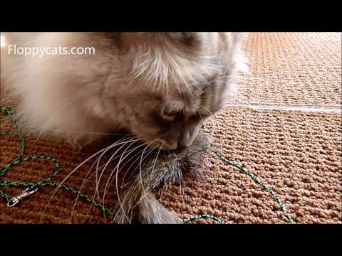 0 Neko Flies Cat Toys Review   Foxifur Kittenator and Kattipede
