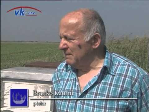 Pčelar Branko Kaurin