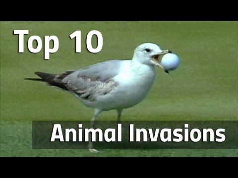 Top 10 Animal Invasions On The PGA Tour
