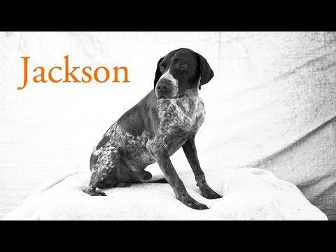 Jackson Freedom Walk