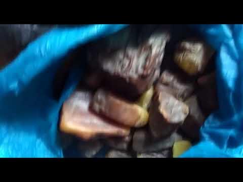 На Житомирщині СБУ затримала групу «цеховиків» з бурштином на 5 млн грн. ВІДЕО