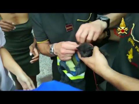 Italien: Katzenrettung in Bussolengo (nahe Verona)
