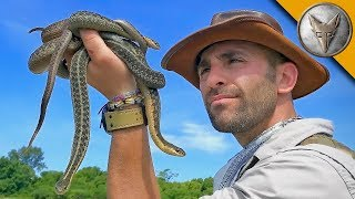 Return to Snake Island!