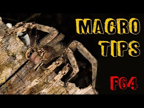 5 Top Macro Tips - with the Tamron 90mm SP Macro