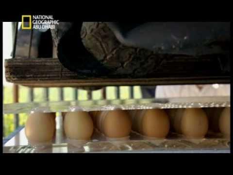 شاهد بالفيديو: شيء لايصدق عن بيض الدجاج