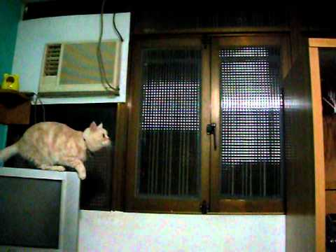 Cat Parkour Fail