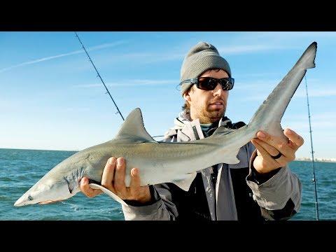 Fishing for BABY Sharks - Thời lượng: 12 phút.