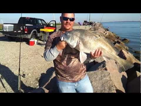 Black drum coastal fishing videos for Texas city dike fishing