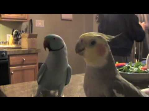 chesawoo - http://www.marnietalk.com Marnie chatting with his best friend Mr. Pretty Bird.