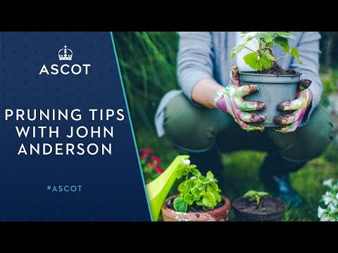 Pruning Tips from John Anderson