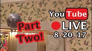 🔴🐦Einstein Parrot LIVE! 8/20/17 - Part Two - In the bathroom, wandering and talking.