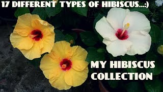 Nonton 17 Different Types Of Hibiscus Flowers In My Garden Film Subtitle Indonesia Streaming Movie Download