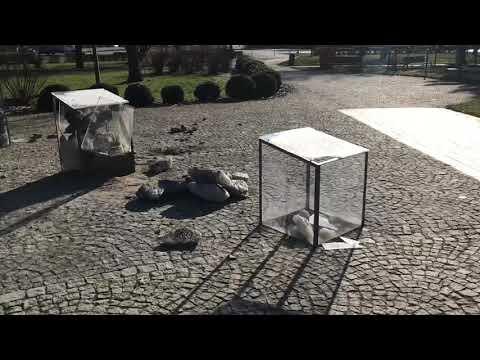 Wideo: Demolka w Parku Wyżykowskiego w Lubinie
