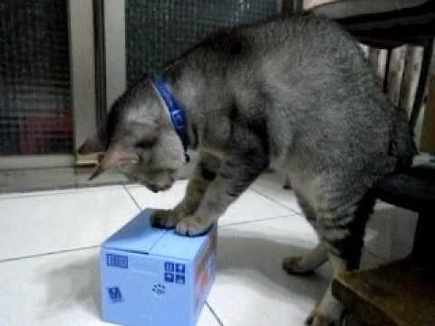 真貓跟假貓拼了!超可愛!