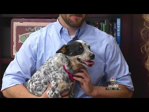 Meet Lilly from the Roanoke Valley SPCA