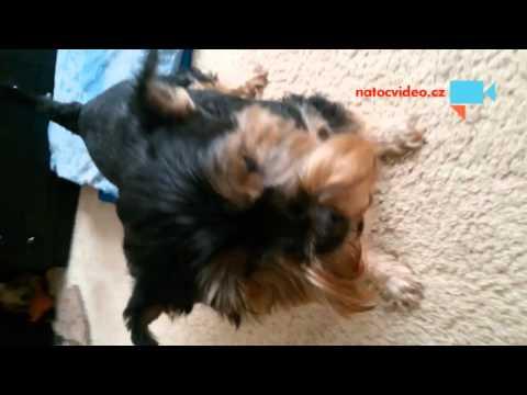 Pes o boj o ps mňamku